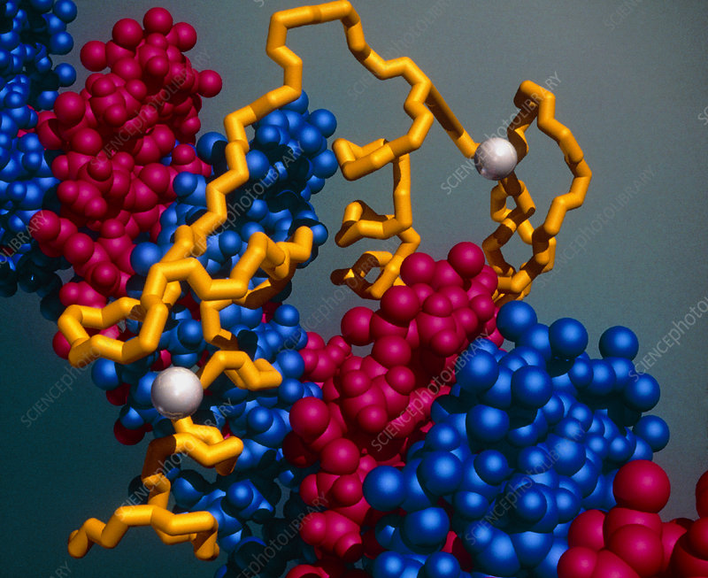 Protein binding to DNA