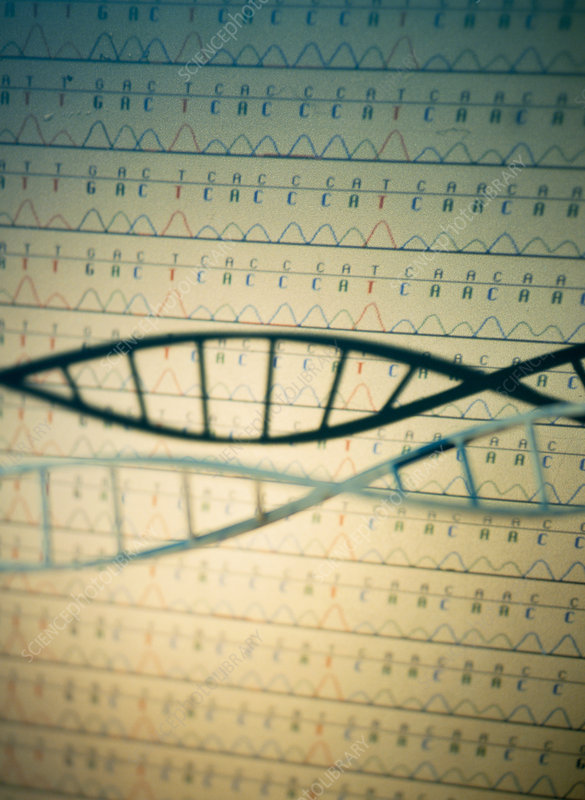 DNA and a genetic sequence
