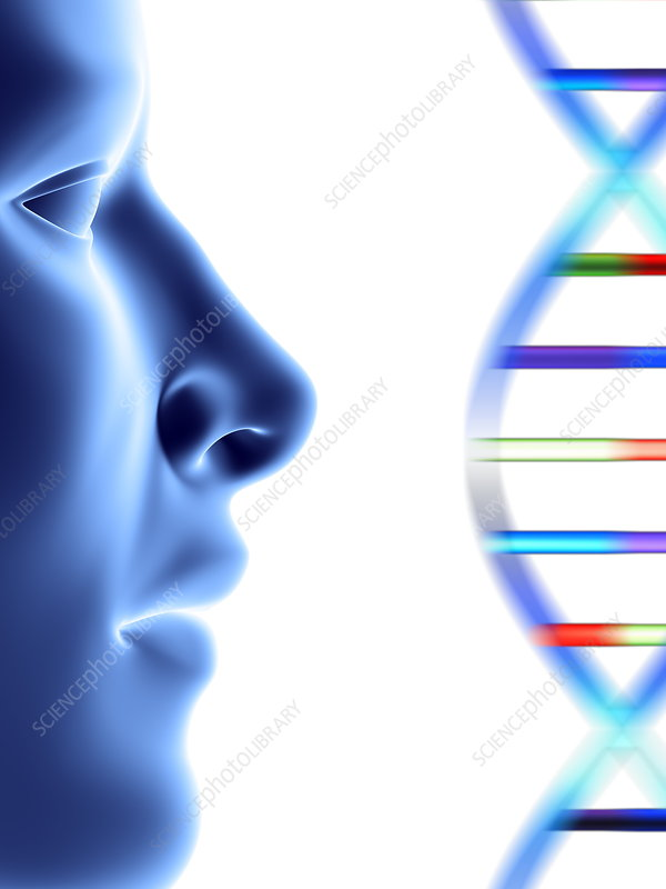 DNA molecule and face