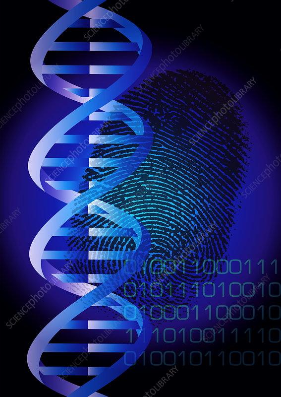Dog Down Syndrome also G Dna Fingerprint Spl in addition Px Pbb Protein Cdk Image additionally Baronzemoii moreover . on human bonding