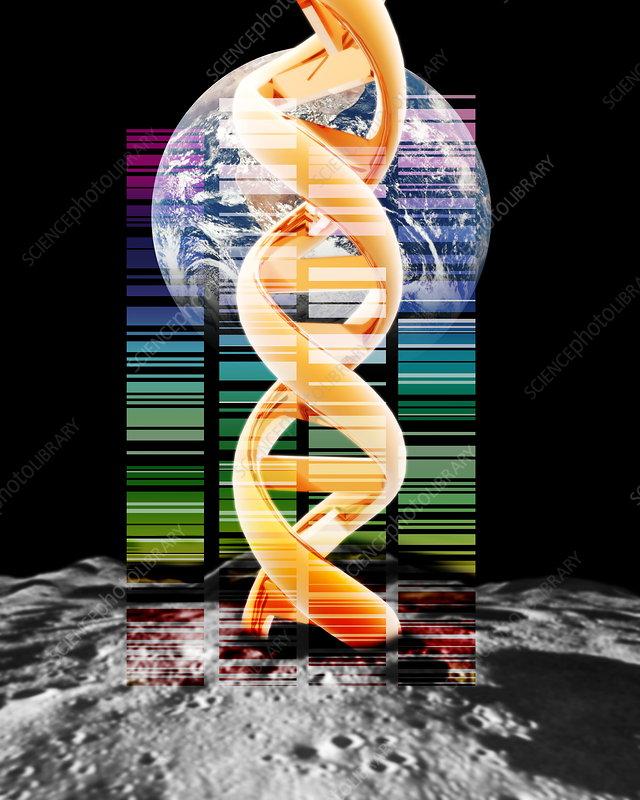Lunar DNA library