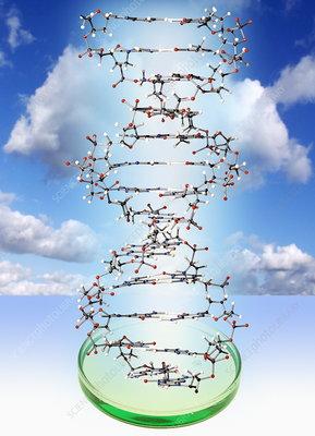 DNA molecule and Petri dish