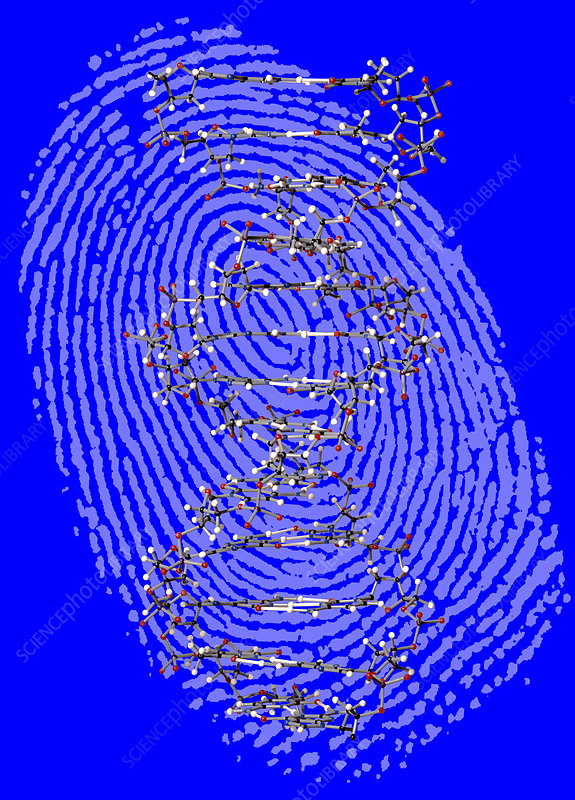 Genetic fingerprint