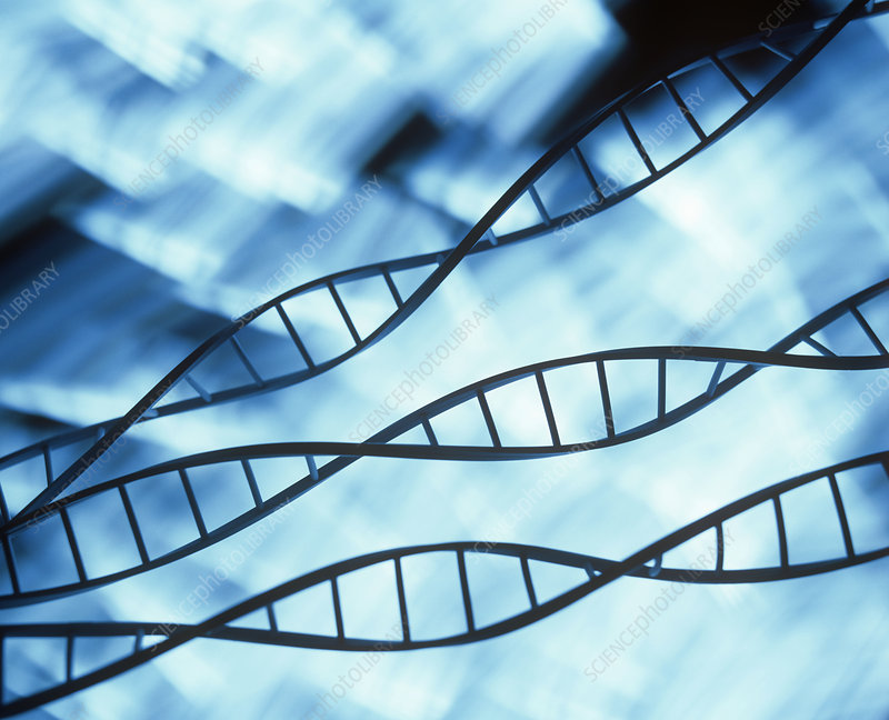 DNA helices