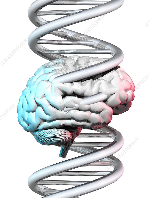 Brain and DNA
