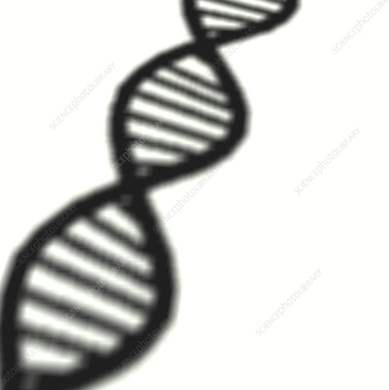DNA molecule shadow
