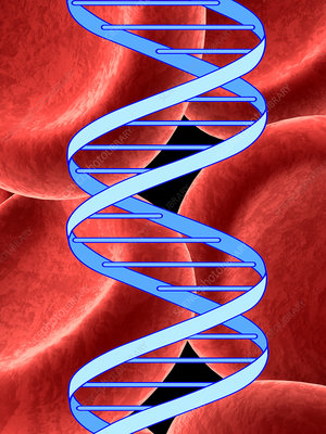 DNA molecule and red blood cells