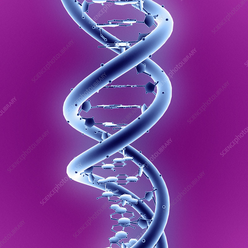 an analysis of the dna molecule profiling in the biotechnology Copy specific target regions of a single molecule of dna to make forensic dna analysis and profiling became (dna project) who does dna profiling in.