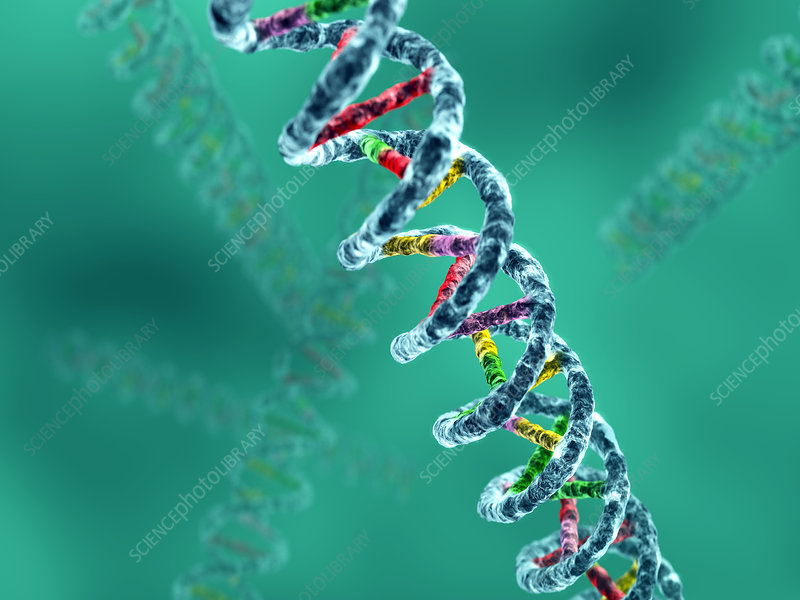 DNA molecule, computer artwork