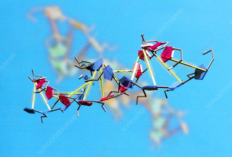 DNA, molecular model
