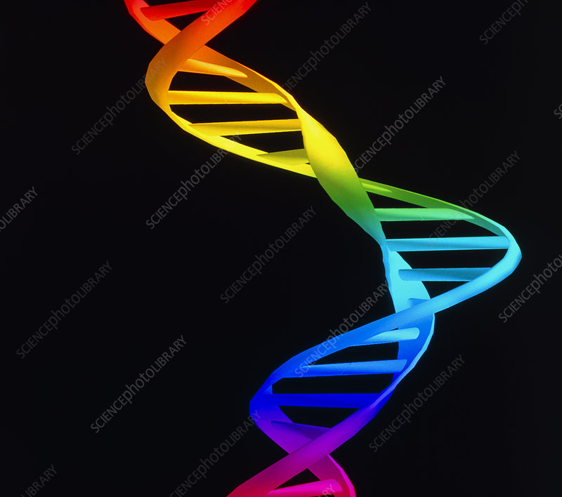 Computer graphic of deformity in a DNA molecule