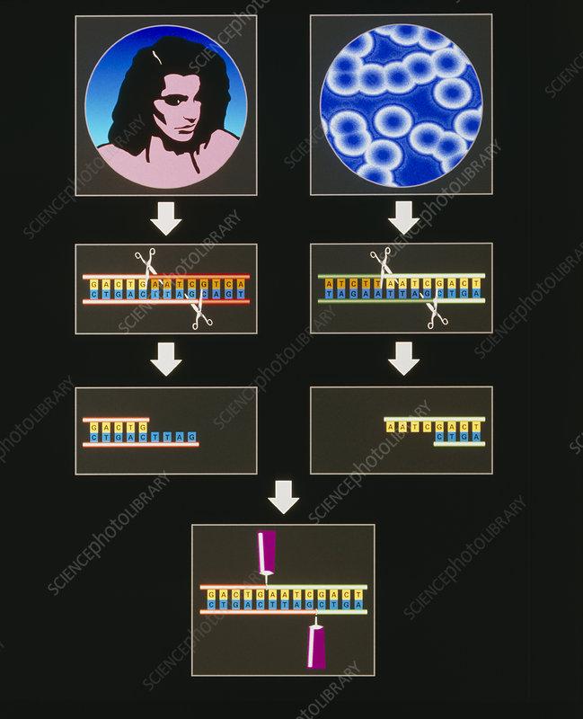 Computer artwork of genetic engineering process