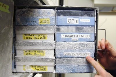 Storage of DNA BioBricks in freezer
