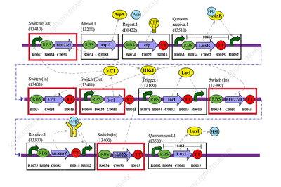 Genetic circuit diagram