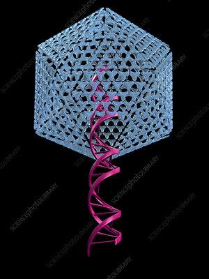 Viral gene therapy, artwork