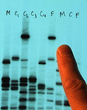 DNA fingerprinting used to prove paternity