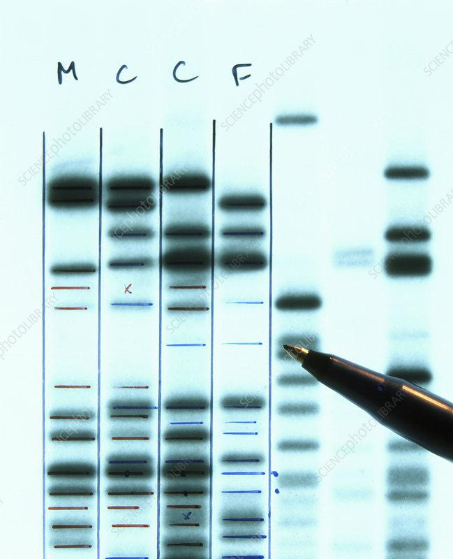 DNA fingerprinting for proving family relationship