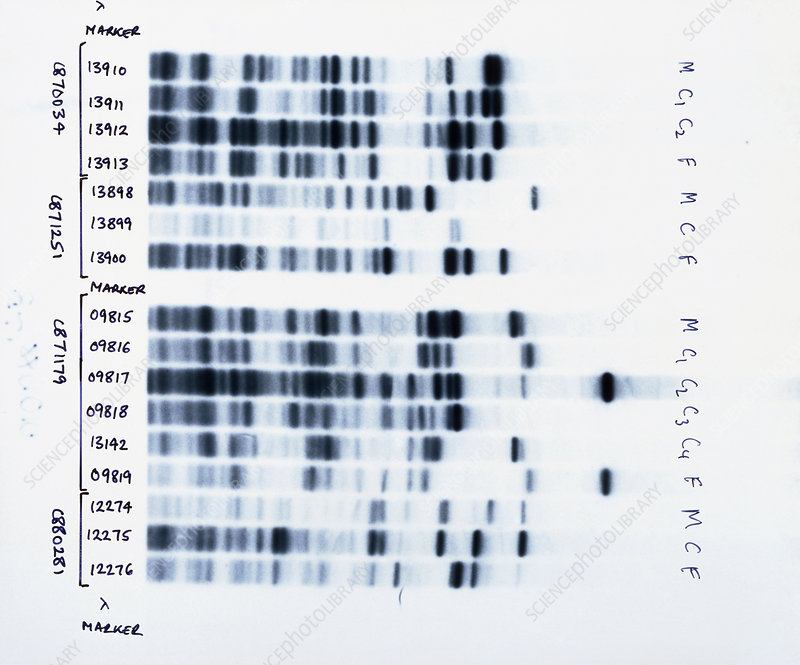 DNA fingerprinting, analysing family rela