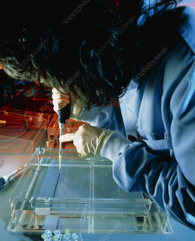 DNA: preparation of agarose electrophoresis gel