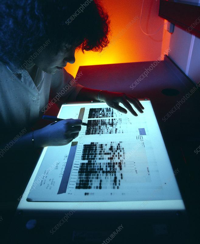 DNA fingerprints