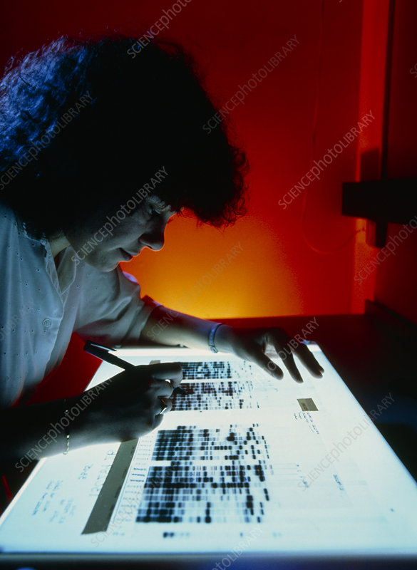 Scientist studying DNA autoradiograms on light box