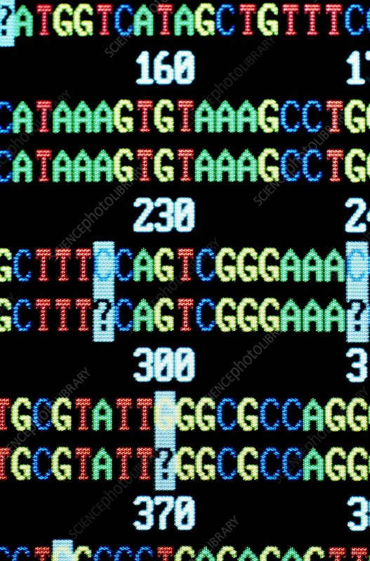 Analysis of DNA sequence of human HL-A system