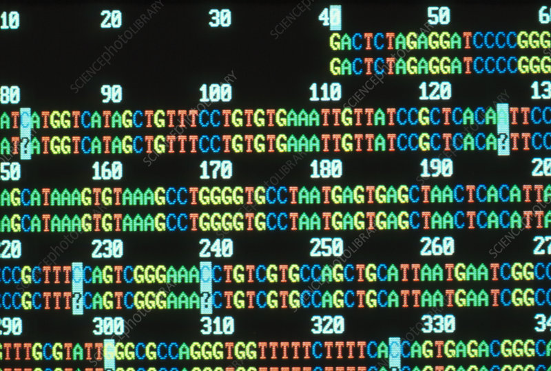 Human genome: computer analysis of DNA sequence
