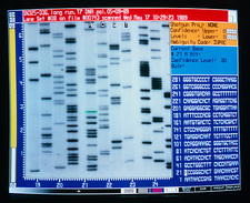DNA sequencing of the human genome