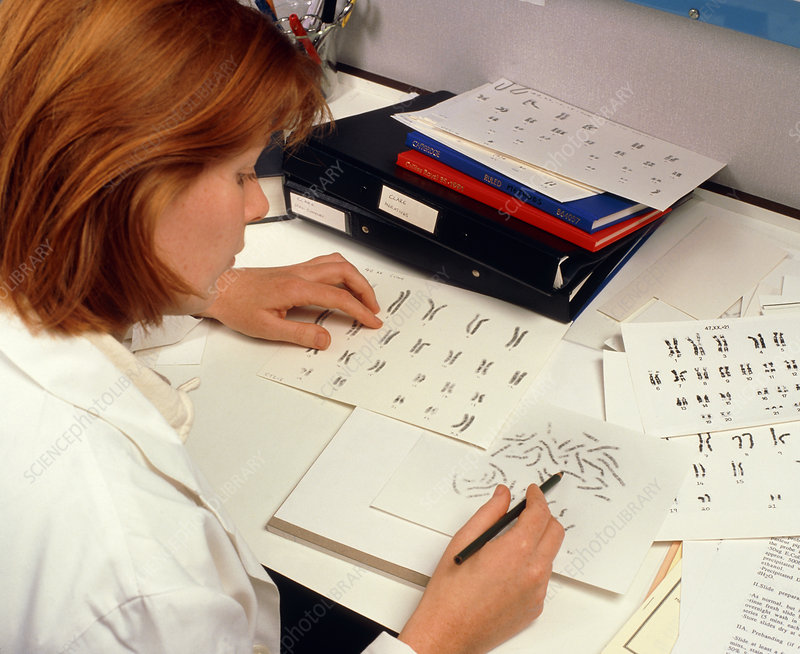 Scientist compiling karyotype of human chromosomes