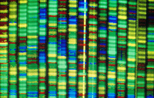 Human genome research: computer DNA sequencing