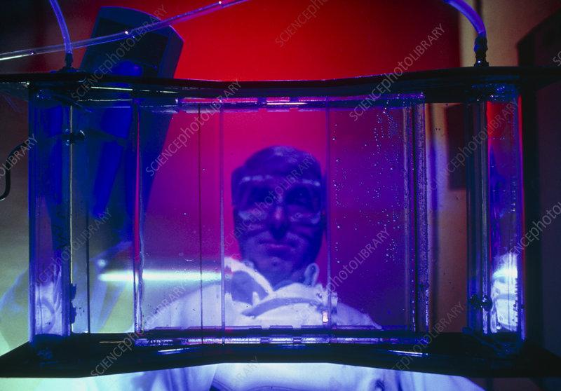 Scientist checking progress of electrophoresis