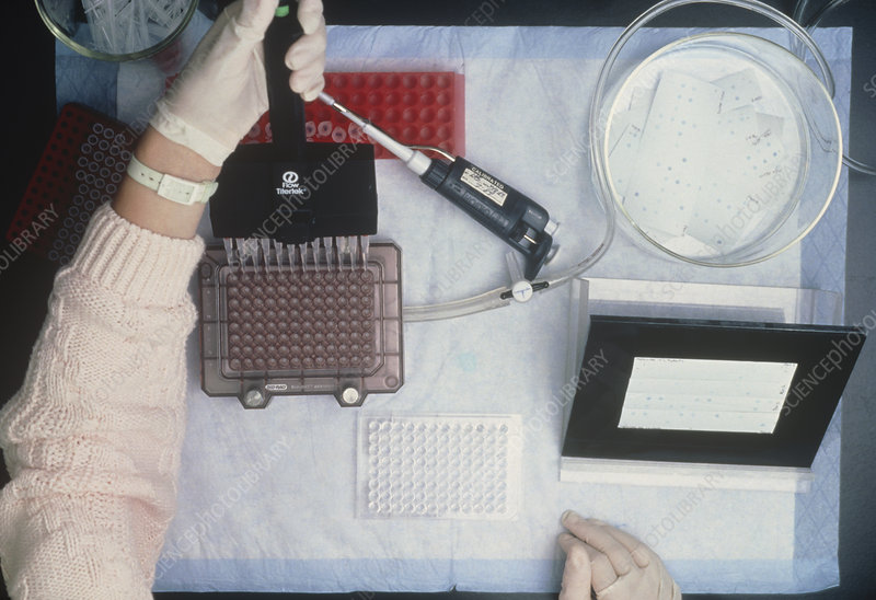 Preparing PCR amplification of DNA fragments