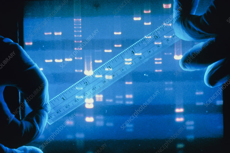 mandatory dna fingerprinting Time to serotyping and dna fingerprinting: the time required for the state public health authorities to serotype and to perform dna fingerprinting on the salmonella isolate and compare it with the pattern of the outbreak strain serotyping may take up to 3 days.