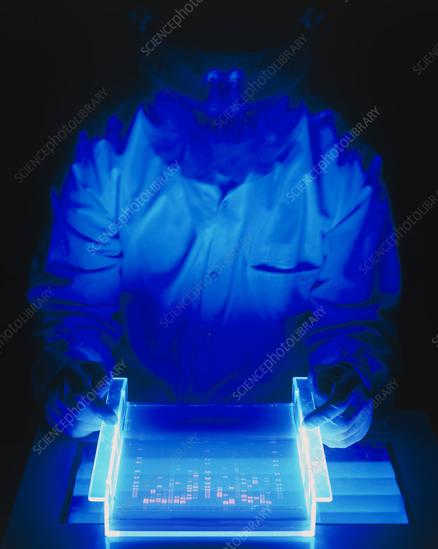 Researcher examines stained & fluoresced DNA gel
