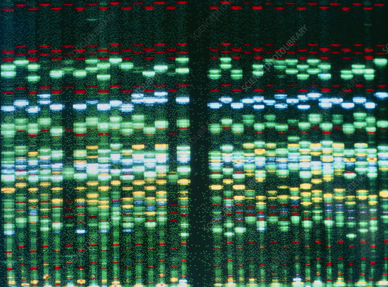 Computer display of DNA sequence for obesity work