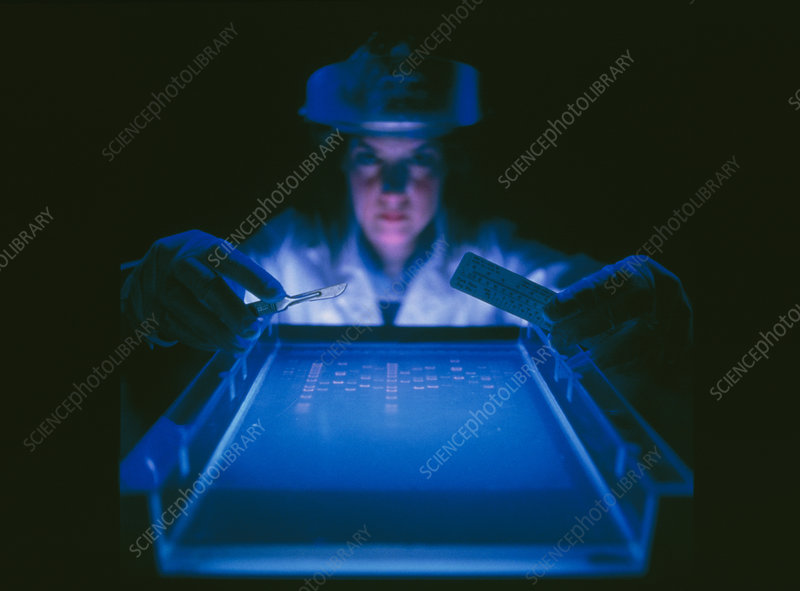 Researcher with DNA electrophoresis equipment
