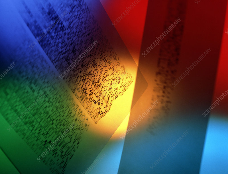 DNA fingerprints: banding on DNA autoradiograms