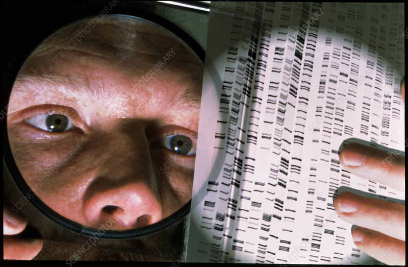 Scientist studies DNA autoradiogram