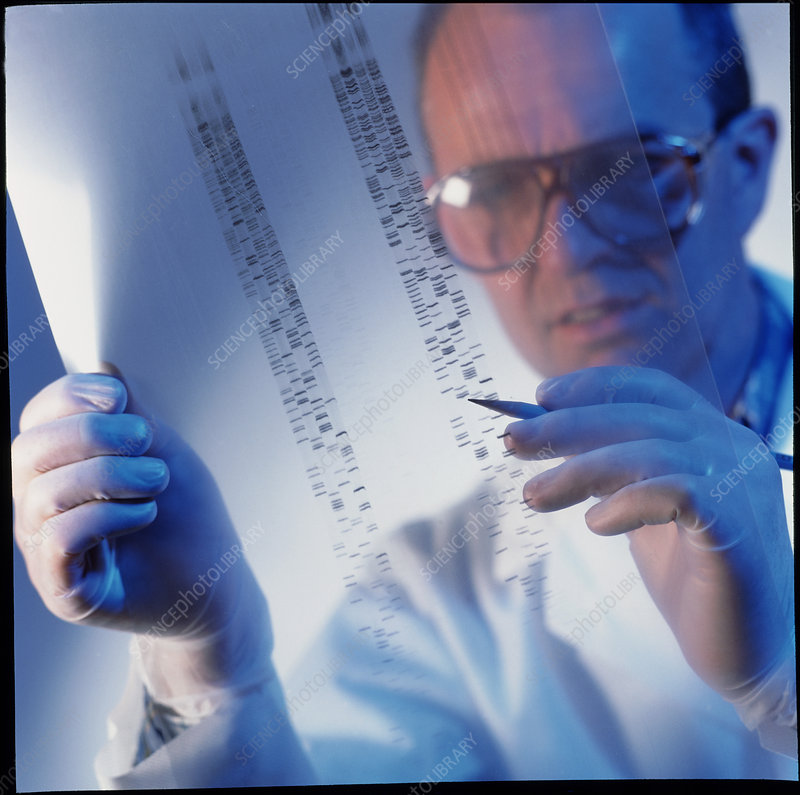 Male technician examines DNA sequences