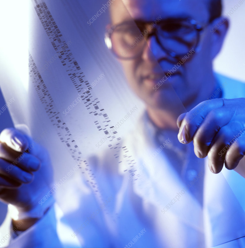 Male technician examines DNA fingerprints