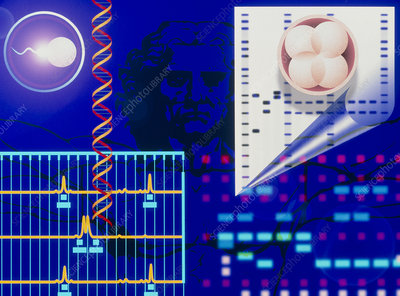 Computer artwork depicting embryo paternity test