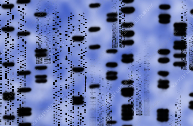 Artwork of an autoradiogram showing DNA sequences