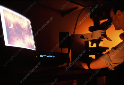 Geneticist studying chromosome under a microscope
