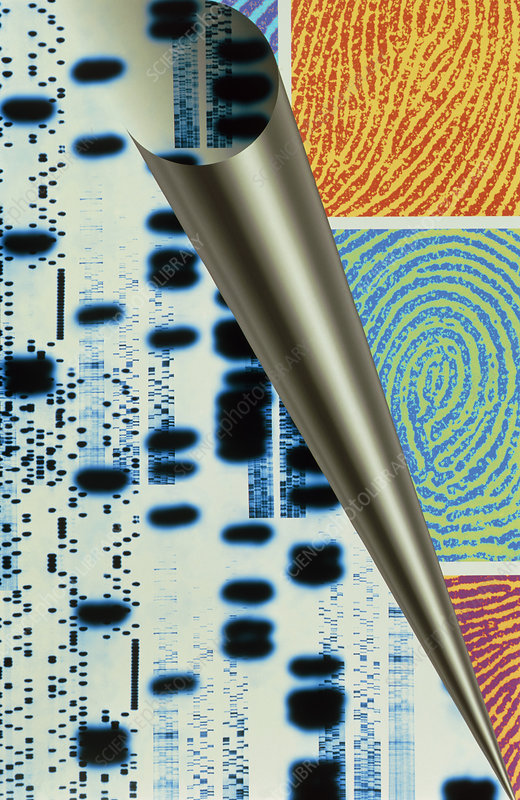 Computer art of DNA sequences & real fingerprints