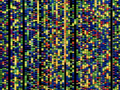 Screen showing a human genetic sequence