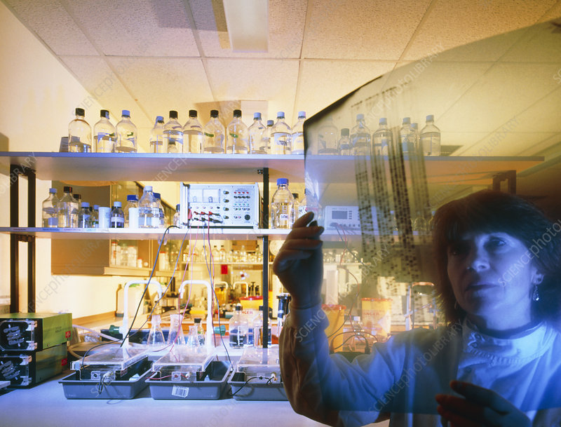 Technician in laboratory prepares DNA fingerprint
