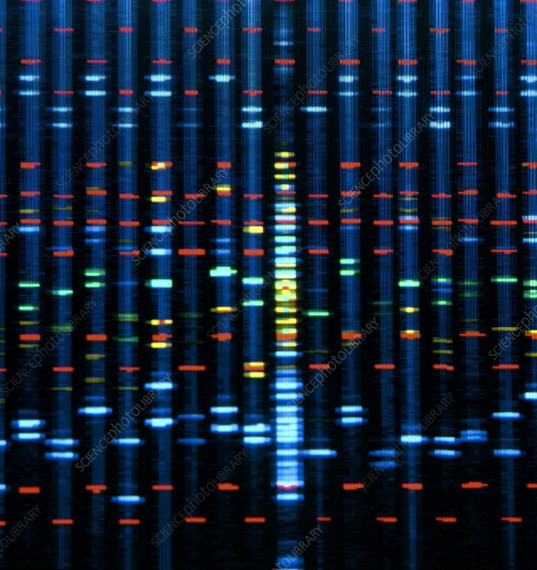 mandatory dna fingerprinting Metric surveillance can include fingerprinting, facial and voice recognition, and  determine if compulsory dna collection is a worthwhile undertaking given the.