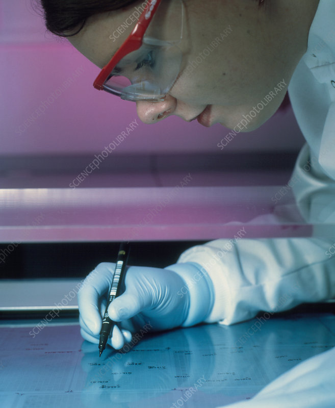 Technician marking bacterial colony autoradiograph