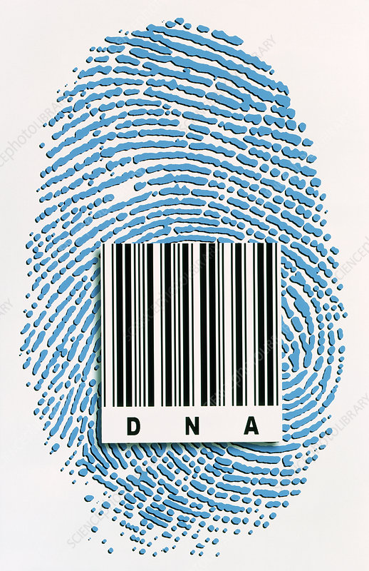 DNA fingerprint