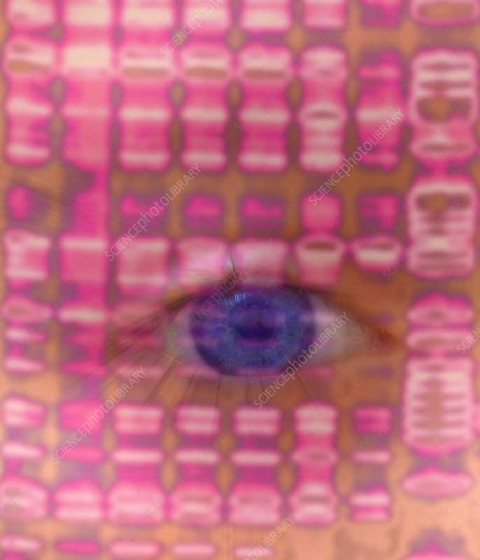 DNA autoradiogram and eye